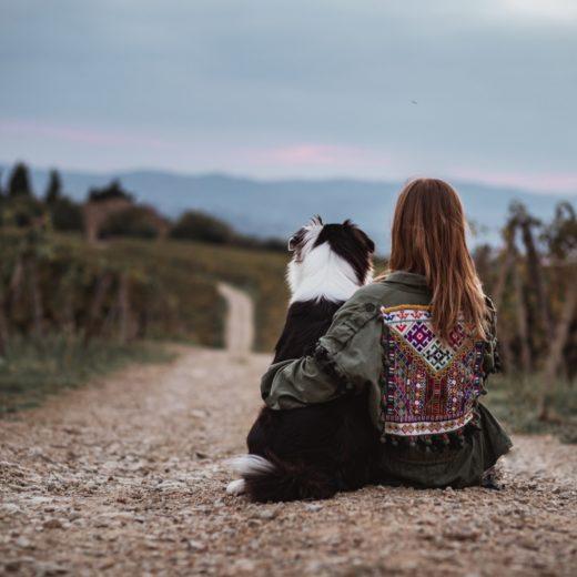 erste Hund zieht ein