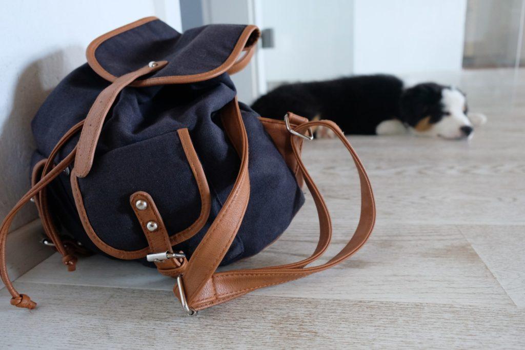 Rucksack für den Welpen packen