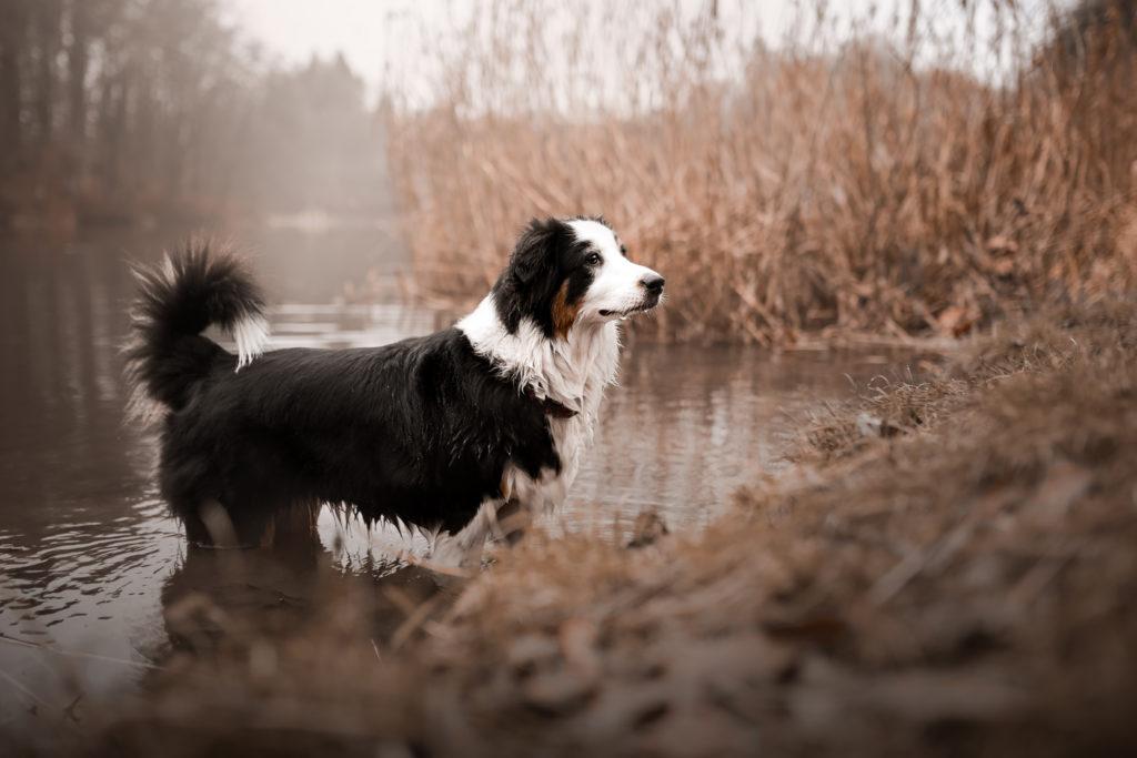 mein erster Hund