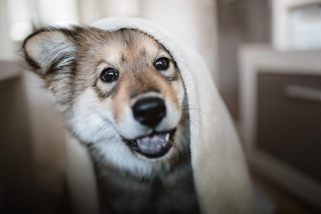 weiterer Hund zieht ein