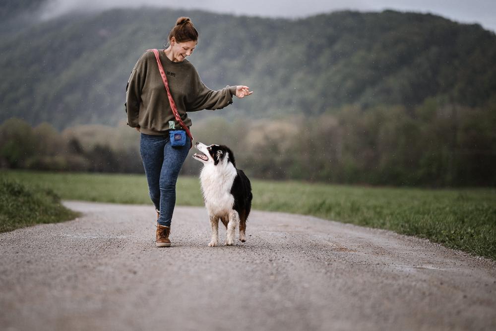 Ein weiterer Hund zieht ein