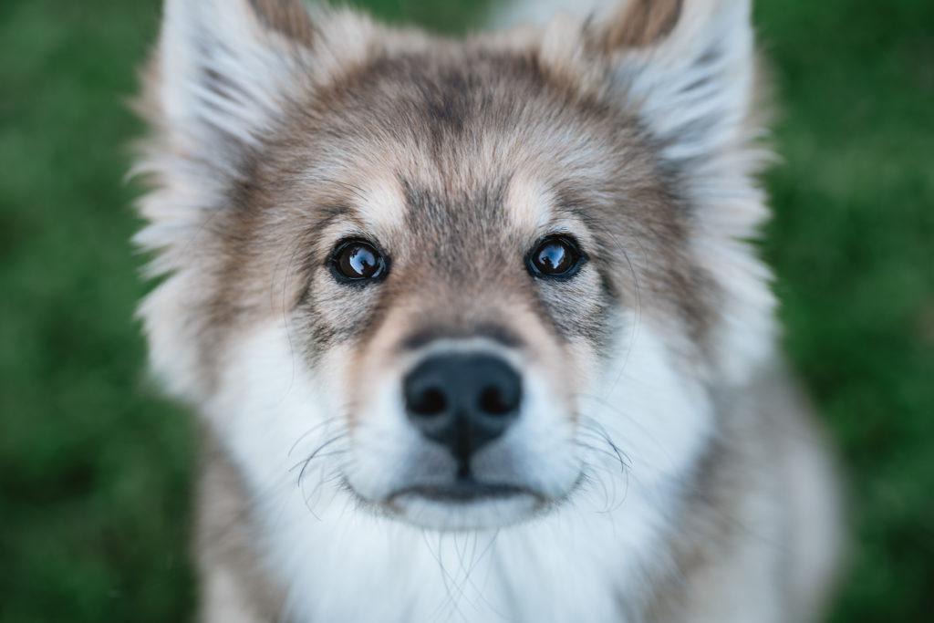 Hund bei Rucksack Pfoten Kamera