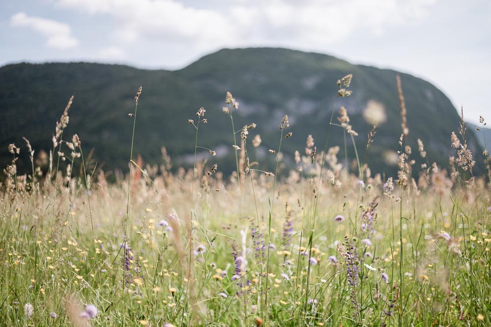Blumenwiesen Triglav Nationalpark