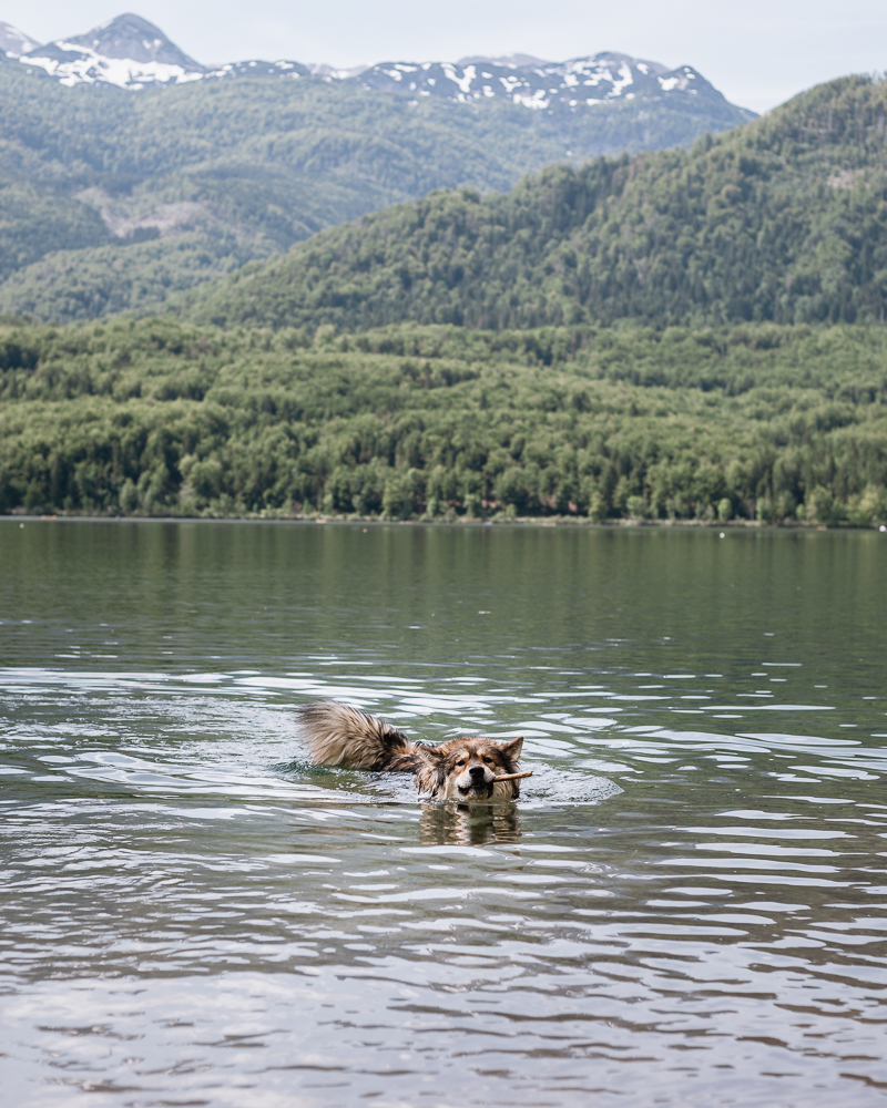 Agilo im Wocheiner See